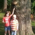 funny face tree
